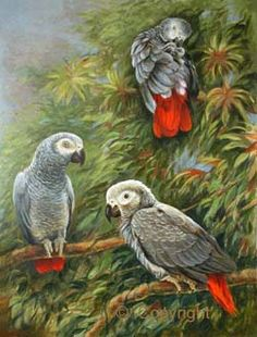 Parrots in Art - Paintings of parrots by Ria Winters - Parrot painting