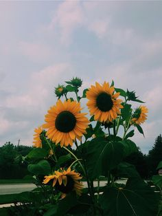 nature is my church Iphone Background Wallpaper, Tumblr Wallpaper, Aesthetic Iphone Wallpaper, Phone Backgrounds, Aesthetic Wallpapers, Sunflowers Background, Sunflowers And Daisies, Cute Photography, Sunflower Photography