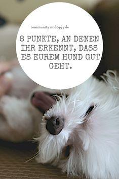 || #Hund || Ideen || #Hunde || Tipps || Tricks || Ideen || Liebe || Welpen || Bilder || #Pflege