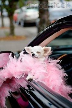 pink #feathers #cutedog
