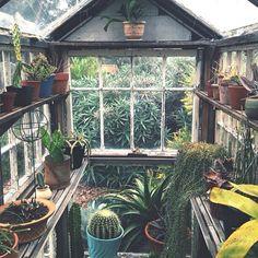 Best backyard in the