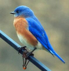 Content in a Cottage: Bluebird At The Cottage