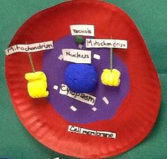 Animal Cell Project - basic structure with labels for grade 3d Animal Cell Project, Plant Cell Project, Cell Model Project, 3d Plant Cell Model, 3d Animal Cell Model, Science Projects, School Projects, Projects For Kids, Plant And Animal Cells