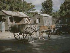 Jibaro en carreta, Santa Isabel c1950 | Puerto Rico