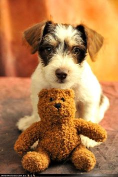 I love this - is this a schnauzer?  looks like one of mine!