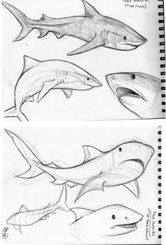 Animals Drawing - 75 Picture Ideas