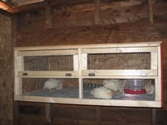 Post pics of your brooders! Inside Chicken Coop, Chicken Coups, Roosters, Chickens Backyard, Coops, Farm Life, Ducks, Birds, Country