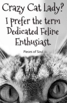 Feral to Friendly Felines I Love Cats, Crazy Cats, Cool Cats, Crazy Cat Lady Meme, Funny Animal Pictures, Cute Pictures, Funny Cats, Funny Animals, Cat People