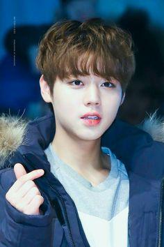 I am your Cutest Oppa😍😍 Ji Hoo, Cho Chang, Guan Lin, Kim Jaehwan, Ha Sungwoon, Child Actors, Ji Sung, Ong Seongwoo, 3 In One