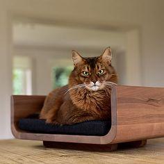 stylecats präsentiert Ihnen hochwertige Kratzbäume und andere wundervolle Katzenmöbel, deren Design nicht nur hervorragend aussieht, sondern auch optimal in Ihr Wohnumfeld passt. Cats, Animals, Design, Scratching Post, Gatos, Animales, Animaux, Animal, Cat