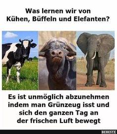 Was lernen wir von Kühen, Büffeln und Elefanten? | Lustige Bilder, Sprüche, Witze, echt lustig