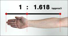 """""""יחס הזהב"""". המספר איפה נמצאת המתמטיקה בטבע? (תעשו קצת הפסקה מהלימודים לבגרות..) =] התגלה הרבה לפני סדרת פיבונצ'י בתקופת יוון העתיקה. היוונים האמינו שהיחס הזה מתאר שלמות, כלומר שהמספר הזה מתאר את היחס המדויק בין גובהו של אדם לאורך פלג הגוף התחתון. וגם היחס המדוייק בין אורך הפנים לרוחבם. ולמעשה היחס כמעט בין כל דבר בגוף האדם.היוונים בנו פסלים רבים על סמך העיקרון הזה."""