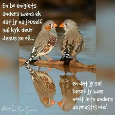 Afrikaanse Quotes, Goeie Nag, Angel Prayers, Goeie More, Morning Blessings, Biblical Inspiration, Good Morning Greetings, Inspirational Thoughts, Christianity