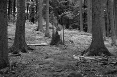 https://flic.kr/p/vDZ3tj | cygnet | Der Wald