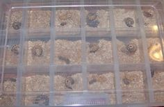 Learn how to breed superworms with this easy how-to guide. Breeding superworms is very useful if you have a lot of reptiles and amphibians to feed.