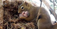 Mama Squirrel And Baby!