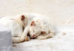 White Cats Fine Art Print. $10.00, via Etsy.