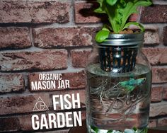 The Mason Jar Aquaponics kit is perfect for your new and sustainable indoor herb garden / salad garden. Aquaponics saves roughly 95% more water, uses 25%-500% less land (vertical gardening) and grows food 2x faster.