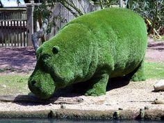 large grass hippo animal - How to Garden-Design Topiary Garden, Garden Art, Garden Design, Beautiful Gardens, Beautiful Flowers, Gardening Zones, Gardening Vegetables, Baby Hippo, Garden Animals