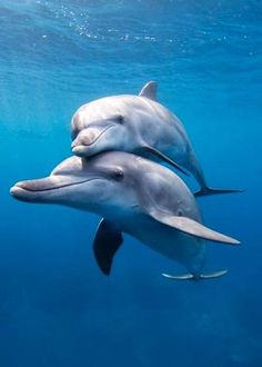 Uploaded by Graziella BZ. Find images and videos about ocean, animals and dolphin on We Heart It - the app to get lost in what you love. Beautiful Creatures, Animals Beautiful, Adorable Animals, Animals And Pets, Baby Animals, Animals Sea, Strange Animals, Delphine, Ocean Creatures