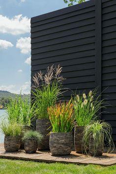 Back Gardens, Outdoor Gardens, White Clematis, Ornamental Grasses, Plantation, Yard Landscaping, Amazing Gardens, Garden Pots, Container Gardening