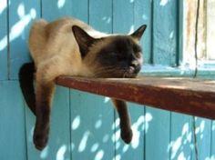Lazy day cat
