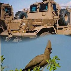 Defence Force, War Machine, Military Vehicles, South Africa, African, Apartheid, Southern