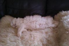 Hard working kitty!