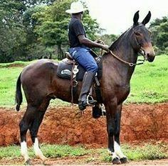 Beautiful mule!!