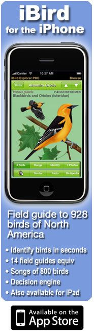Bird Identifier - enter shape, size, color, bill shape & size, etc etc to figure out what breed of bird you've found.  Great resource! (they also have an iphone app so you can use it on the go)