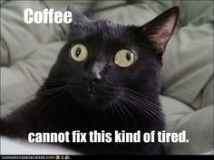AMEN!!! Google Image Result for http://icanhascheezburger.files.wordpress.com/2012/04/funny-cat-pictures-lolcats-coffee-is-good-sleep-is-better.jpg