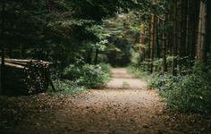autumn is here | by Sandra Schmid Fotografie