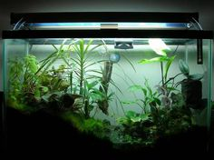 What amphibian will work in a setup like this? - Caudata.org Newt and Salamander Forum