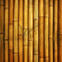 Find Bamboo Fence stock images in HD and millions of other royalty-free stock photos, illustrations and vectors in the Shutterstock collection. Crack Sticks, Bamboo Fence, Plates On Wall, Textured Background, Art Decor, Photo Editing, Bedroom Decor, Rustic, Stock Photos