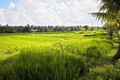 Tipps für Bali - bei dieser Suchanfrage im Internet wirst du mit Beiträgen regelrecht überschüttet. Und zurecht! Heute zeige ich dir meine 9 Tipps für Bali