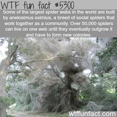 Some of the largest spider webs in the world