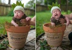 Cute Harry Potter Baby Mandrake Costume -- This is the funniest thing I have ever seen!