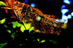 Skeleton Leaf by Butler & Sons Design - Customer Artwork and Photography (my personal favorite on this site)