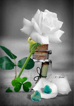 Beautiful Rose Flowers, Amazing Flowers, Bleeding Rose, Diy Furniture Videos, Splash Photography, Hearts And Roses, Rose Wallpaper, Pretty Wallpapers, Green Colors