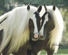 Gypsy Vanners. The Gypsy Horse (USA), also known as an Irish cob (Ireland/UK), Gypsy Cob, Gypsy Vanner (USA), Coloured Cob (UK/Ireland) or Tinker horse (Europe),
