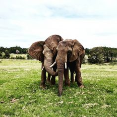 Knysna Elephant Park, Knysna, South Africa www. East London, West Coast, South Africa, Fun Facts, Wanderlust, Explore, Photography, Travel, Viajes