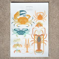 The 'Crustaceans of Australia' screen print shows a selection of Australia's crustaceans: the Tasmanian Giant Crab, Blue Swimmer Crab, Spider Crab, Golden Ghost Crab, Mangrove Fiddler Crab, Hermit Crab, Langoustine, Common Coastal Shrimp and West-Australia's endemic Western Rock Lobster. 6 colour, 100% handmade/hand pulled silk screen print. 225 gsm paper. Size: A2 (42 x 59.4cm) Signed and numbered, limited edition of 50. Price $110 Available from http://www.amokisland.com/pages/shop/