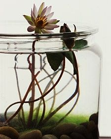 Indoor Water Gardens - Martha Stewart Home & Garden