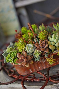 Rusty Basket of Succulents.