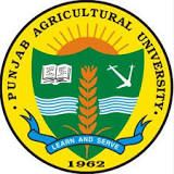Jobs in Punjab Agricultural University