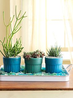 Line a flat waterproof tray with chunks of sea glass and elevate a collection of potted plants to focal-point status. The tray will also help to protect your tabletop from water spills.