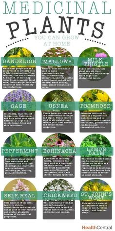 Some ideas for medicinal herbs - though best left to the naturopaths.