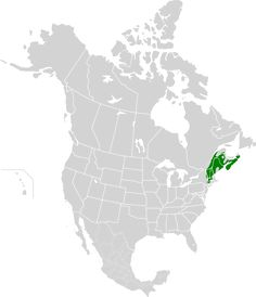 New England-Acadian forests map.svg