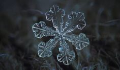Gazillions of #snowflakes are coming! See how snowflakes are born (video)! #blizzard2016