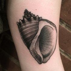 @zanependergast Veined rapa whelk,  Rapana venosa traditional engraving, woodcut style black and grey tattoo Massachusetts